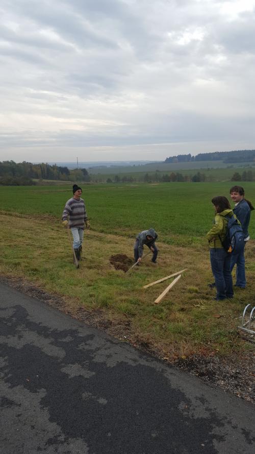 Tisíc stromků pro Plzeňský kraj 2016